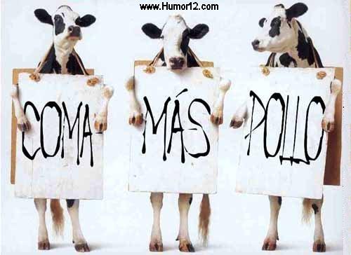 Huelga de Vacas.. Coma más Pollo! - Fotos de animales - Humor12.com