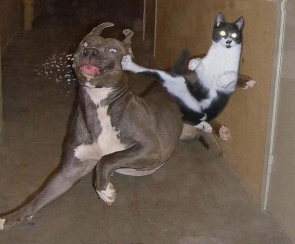 fotos-graciosas-perros-gatos.jpg