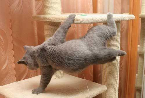 ¡Gato The Matrix!
