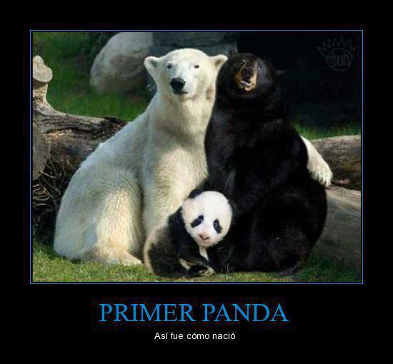 La historia del primer panda, descripcion grafica